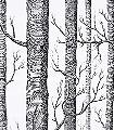 Woods-No.47-Bäume-Moderne-Muster-Schwarz-Weiß-Schwarz-und-Weiß