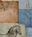 Studi-Equestri-Tiere-Fototapeten-FotoTapeten-Multicolor