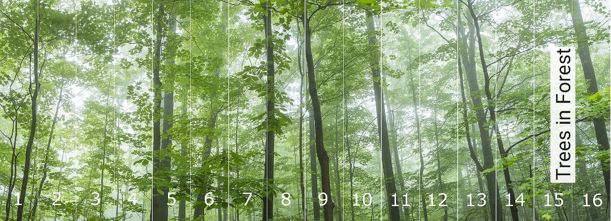 Tapete Trees in Forest | Panoramic Images® | Die TapetenAgentur