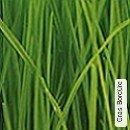 Gras Bordüre