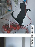Guitou the black cat
