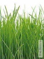 Tapete: Gras Bordüre