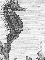 Tapete: Seahorse, col.01