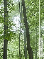 Tapete: Trees in Forest