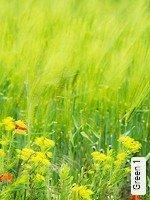 Tapete  - Keine Weichzeiten Green 1