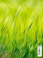 Tapete  - Keine Weichzeiten Green 2