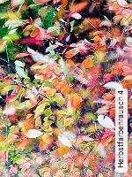 Tapeten  - Stossfest Herbstfarbenrausch 4