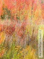 Tapete: Herbstfarbenrausch 2