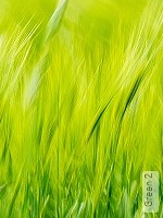 Tapete: Green 2