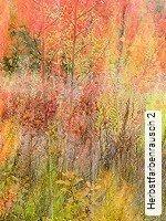 Tapete  - Schemen/Silhouetten Herbstfarbenrausch 2