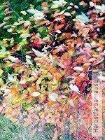 Tapete  - Schemen/Silhouetten Herbstfarbenrausch 4