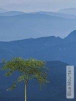 Tapete: Blue Mountain