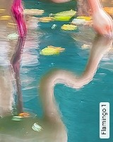 Tapete  - Exotische Tapeten Flamingo 1