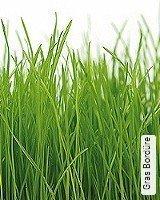 Tapeten  - TapetenFrühling Gras Bordüre