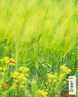Tapete  - TapetenFrühling Green 1