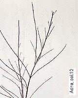 Tapete  - Winter 2014 Adna, 10