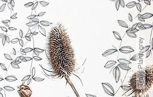 Bild Tapete - Traily Plant, grey