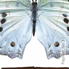 Preis:144,67 EUR - Kollektion(en): - Fauna - FotoTapete