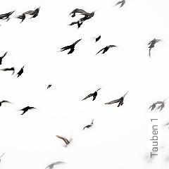 Preis:343,00 EUR - Kollektion(en): - Fauna - FotoTapete