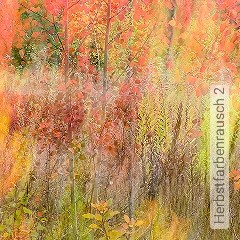 Preis:405,00 EUR - Kollektion(en): - Florale Muster