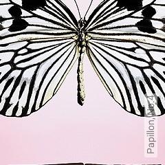 Preis:144,67 EUR - Kollektion(en): - Schmetterlinge