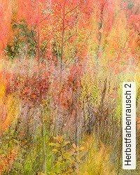 Herbstfarbenrausch 2