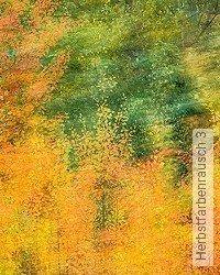 Tapete: Herbstfarbenrausch 3
