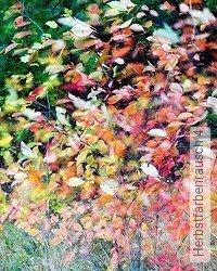 Tapete: Herbstfarbenrausch 4
