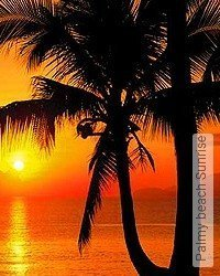 Tapete: Palmy beach Sunrise