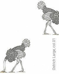 Tapete: Ostrich Large, col.01