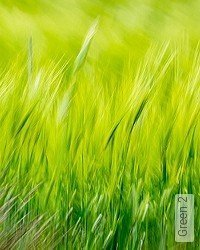 Tapete: Green 2