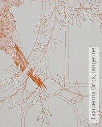Tapete: Taxidermy Birds, tangerine