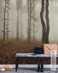 Tapete: Timberland