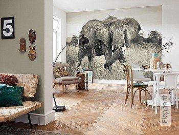 Tapete: Elephant