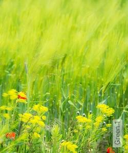 Preis:171,50 EUR - Kollektion(en): - Frischer Wind für Ihre Wohnung - FotoTapete