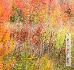 Bild Tapete - Herbstfarbenrausch 2