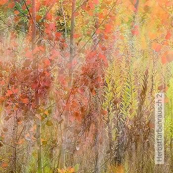 Preis:405,00 EUR - Kollektion(en): - Bäume - FotoTapete