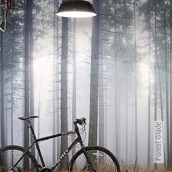 Preis:310,00 EUR - Kollektion(en): - Bäume