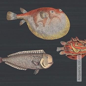 Bild   Fische Nummer 321270075 - Tapete Fische