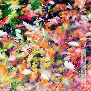 Preis:180,00 EUR - Kollektion(en): - Florale Muster - FotoTapete