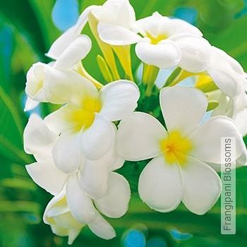 Price:52,85 EUR - Kollektion(en): - Flowers