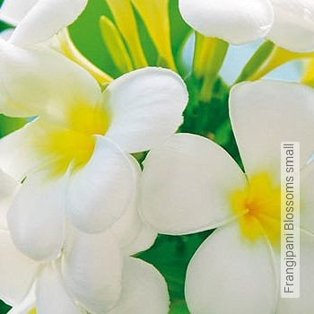 Price:34,65 EUR - Kollektion(en): - Flowers