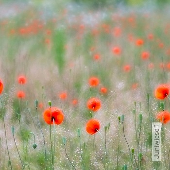 Preis:343,00 EUR - Kollektion(en): - FotoTapete - Botanik