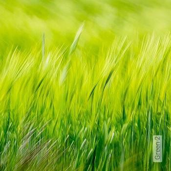 Preis:343,00 EUR - Kollektion(en): - FotoTapete - Florale Muster - Abwaschbare Tapeten