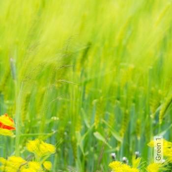 Preis:171,50 EUR - Kollektion(en): - FotoTapete - Gras