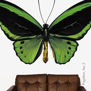 Preis:144,67 EUR - Kollektion(en): - FotoTapete - Gute Lichtbeständigkeit - Schmetterlinge - Schwarz