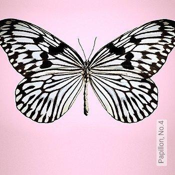 Preis:144,67 EUR - Kollektion(en): - FotoTapete - Schmetterlinge