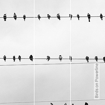 Preis:838,16 EUR - Kollektion(en): - FotoTapete - Vögel