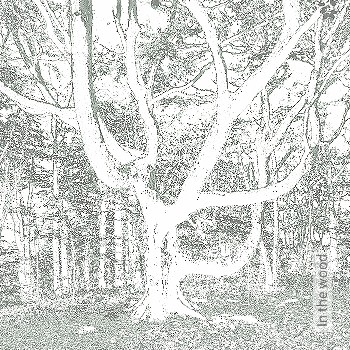 Preis:438,00 EUR - Kollektion(en): - Frischer Wind für Ihre Wohnung - Braun - Bäume - FotoTapete - EN15102/EN13501.B-s1 d0 - Creme