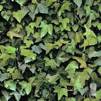 Preis:44,00 EUR - Kollektion(en): - Grüne Tapeten